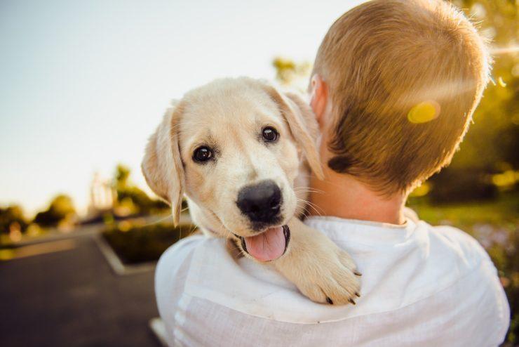 Poradnik jakie imię dla psa wybrać
