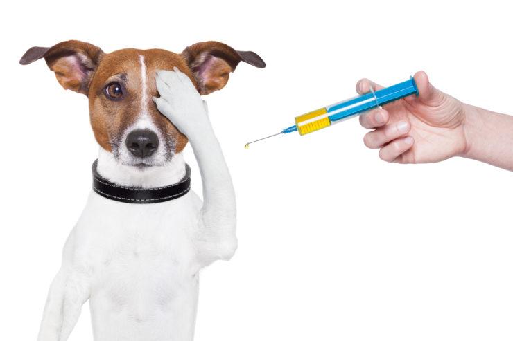 Kalendarz szczepień dla psa