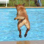 Jak nauczyć psa pływać?