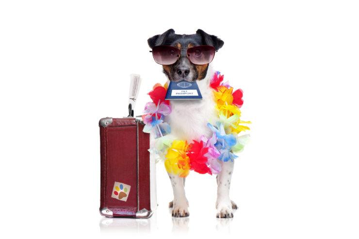 Czy psu potrzebny paszport?