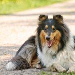 Dlaczego psy dyszą?