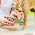 Czym obcinać pazury psa?