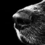 Czy pies czuje śmierć człowieka?