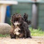 Jak nauczyć psa szczekać na obcych?