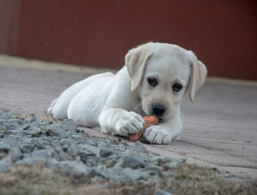 jakie warzywa moze jest pies?