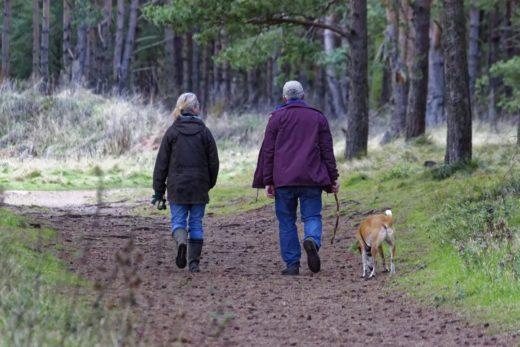 Jakich zachowań trzeba nauczyć psa?