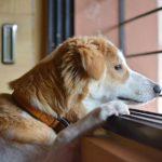 Czy pies wytrzyma 8 godzin sam w domu?
