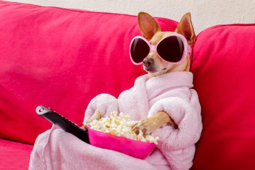 Fajne filmy o psach