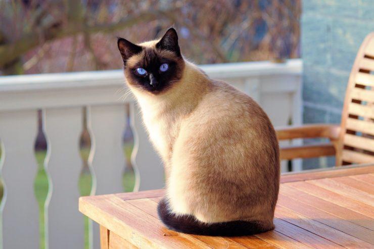 Dlaczego właściciele kotów są szczęśliwsi?