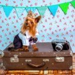 Jak wyrobić paszport psu?