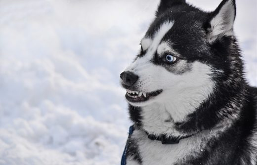 Dlaczego pies jest agresywny?