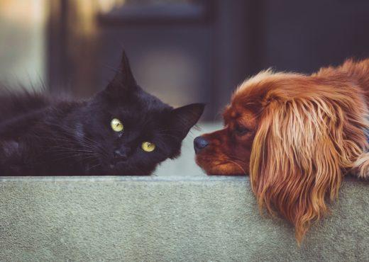 Czy pies i kot w jednym domu to dobry pomysł?