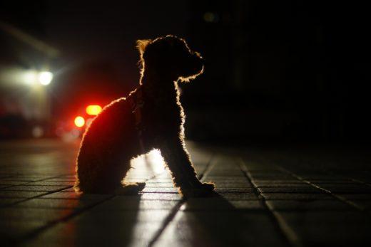 Pies szczeka całą noc