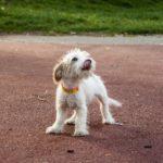 Gdzie kupić ubezpieczenie dla psa