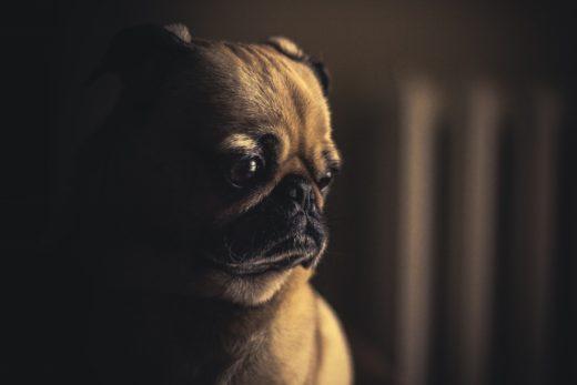 Czy pies może mieć depresje?