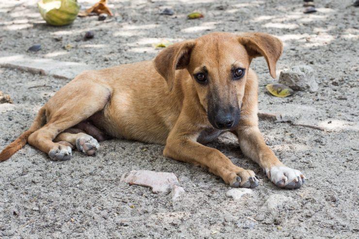 Co zrobić ze znalezionym psem?