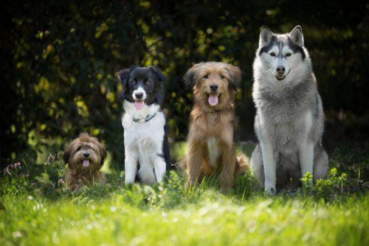 Co trzeba wiedzieć przy wyborze rasy psa