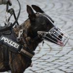 Psy policyjne - adopcja