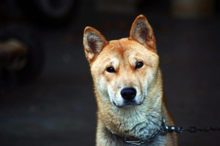 Jak psy reagują na emocje właściciela?