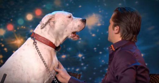 Śpiewające psy