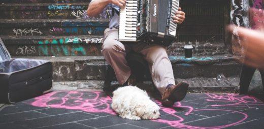 Muzyka relaksacyjna dla psów