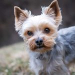 Jak zrozumieć psa