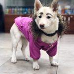 Pies z brwiami historia