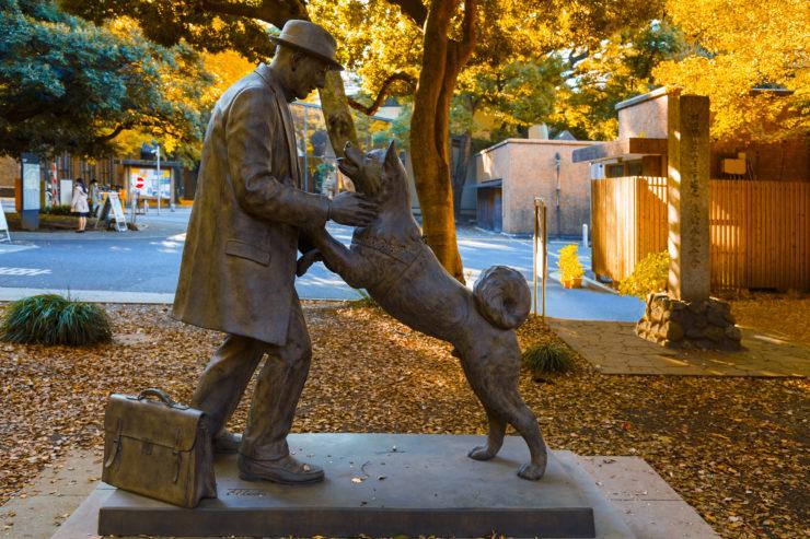 Pomnik psa Hachico