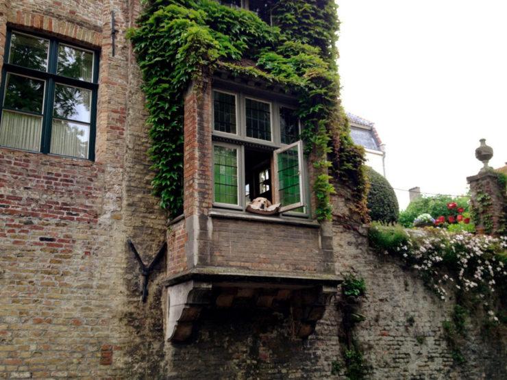 Nie żyje labrador Fidel - pies z okna w Brugii