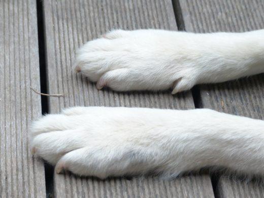 Ile pies ma palców?