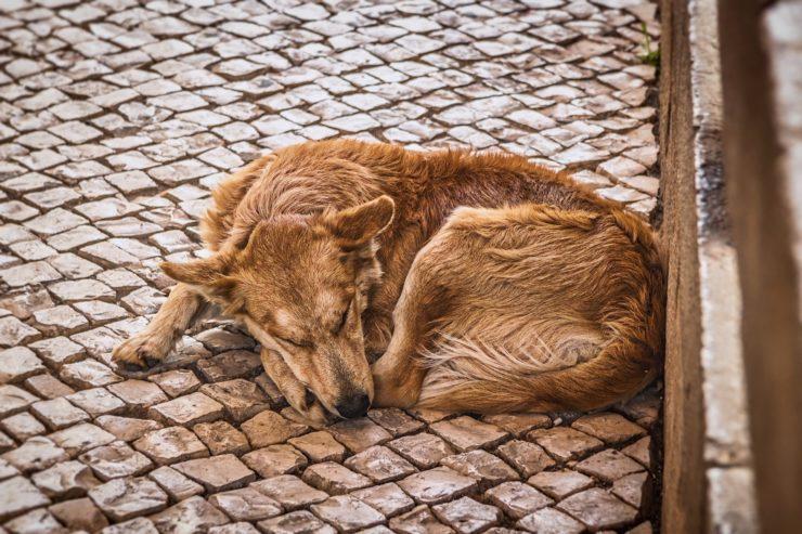 Bezdomne psy - prawo