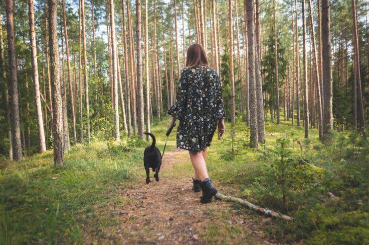 Zakaz wstępu do lasu - gdzie nie można spacerować