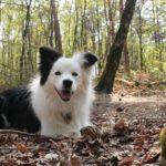 5 oznak szczęśliwego psa