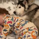 Dziecko nie może zasnąć bez swoich psiaków