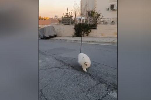Psiak wyprowadzany przez drona