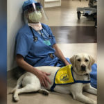 Labrador Wynn - psi terapeuta