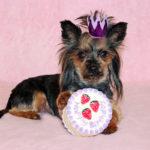 Jak zorganizować urodziny dla psa