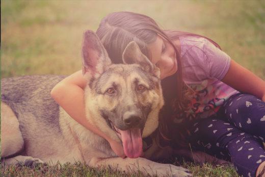 Utrzymanie psa – jakie koszty można wliczyć.