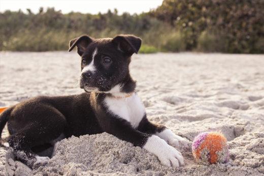 Pies na plaży - przepisy. Czy można iść z psem na plażę?