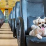 Czy pies może jechać pociągiem?