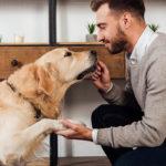 Behawiorysta zwierząt - co musisz o nim wiedzieć?