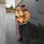 Pies zaginał podczas tornada, odnaleziono go po 54 dniach