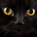 Czy kot może widzieć ducha?