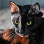 Imię dla czarnego kota - top 10