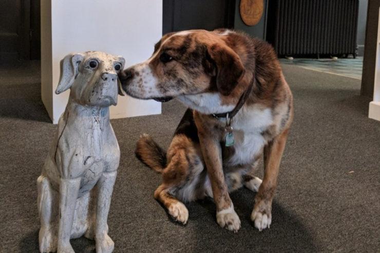 Muzeum psów w nowym jorku