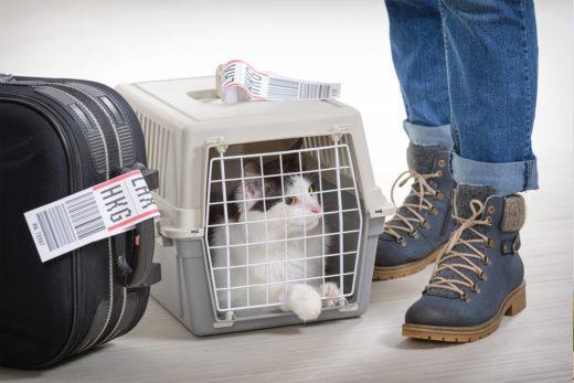 Paszport dla kota - cena