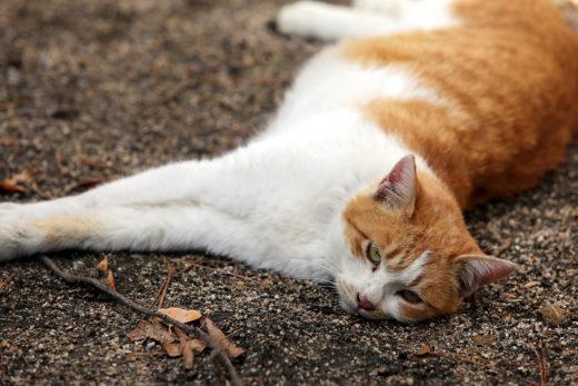 Oznaki śmierci kota
