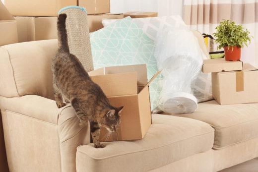 Przeprowadzka z kotem - o czym pamiętać?
