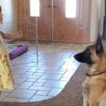 przeurocza zabawa dziewczynki i jej psa