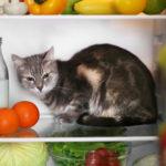 Czy kot może jeść masło?